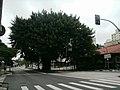 Avenida Rebouças x Rua João Moura - panoramio (1).jpg