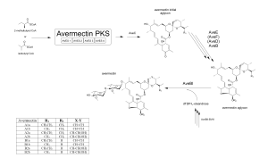 Avermectin - Diagram showing the schematic synthesis of avermectins
