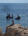 Aves e Iguana. - panoramio.jpg