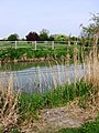 Aylesbury Arm, The Reeds have been cleared to facilitate fishing - geograph.org.uk - 1269491.jpg