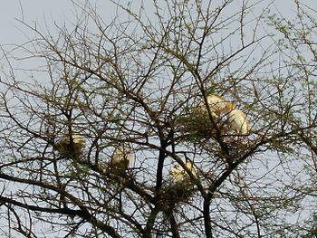 BAGULAS THE BIRDS.jpg