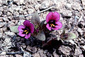BLM Botany 06 (6871306147).jpg