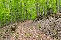 Bad Wünnenberg - 2019-04-25 - PB-060 Leiberger Wald (20).jpg