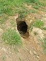 Badger hole - geograph.org.uk - 408620.jpg