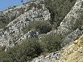 Banat, St.Helena - panoramio (44).jpg