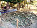 Bangabandhu Safari Park Cox's Bazar 09.JPG