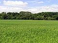 Barley Field near Bradfield - geograph.org.uk - 18541.jpg