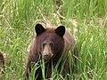 Bear 14.jpg