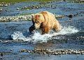 Bear Alaska (2).jpg
