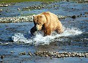 175px-Bear_Alaska_%282%29.jpg
