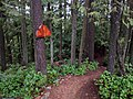 Bear DH trail entrance off SA100 - panoramio.jpg