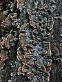 Beauty of mushrooms.jpg