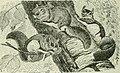 Beginners' zoology (1921) (14594179278).jpg
