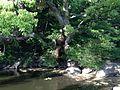 Benten'ike Pond in Tokushima Central Park 1.JPG
