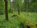 Białowieża National Park, Poland (4663861001).jpg