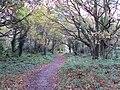Bidston Hill - DSC04322.JPG