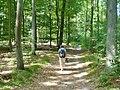 Bieselheide - Waldweg (Woodland Path) - geo.hlipp.de - 39608.jpg