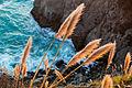 Big Sur Shoreline.jpg
