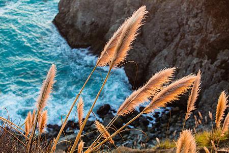 Big Sur Shoreline