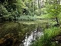 Biotop Nietenbuck - panoramio.jpg