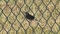 Bird - Saskatoon, Saskatchewan 01.jpg