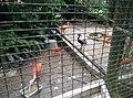 Birds in Zoo Negara Malaysia (5).jpg