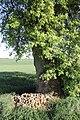 Birnbaum Hohbach 06.jpg