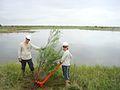 Bitter Lake Refuge, NM (5169475301).jpg