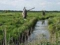Blasted willows, bleak marshes - geograph.org.uk - 1305080.jpg