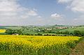Blick-auf-Warburg-Landschaft.jpg