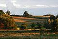 Blick von Rothenmoor zum Schlehenberg.jpg