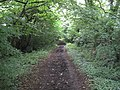 Bluebell Lane Bridleway - geograph.org.uk - 1415482.jpg