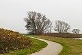 Bomengroep aan fietspad om Langweerderwielen (Langwarder Wielen). Oostkant 04.jpg