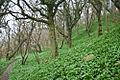 Bornholm - West Coast Trail.jpg