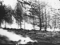 Bosbouw, bosbrand, Bestanddeelnr 193-0426.jpg