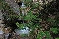 Bosco e torrente Acquabianca -Senerchia Oasi naturale Valle della Caccia -Avellino 28.jpg