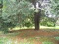 Botanička bašta Jevremovac 015.JPG