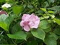 Botanical garden (Zugdidi19).jpg
