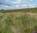 Boundary stones, Blackstone Edge Road, Mytholmroyd - geograph.org.uk - 1470545.jpg