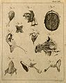 Brain and sensory organs; ten figures showing dissections of Wellcome V0008029EL.jpg
