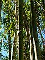 Brevard Zoo - Flickr - Rusty Clark (64).jpg
