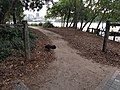 Brisbane river trail by kangaroo point.jpg