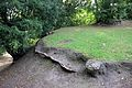 Bryn y Beili, yr Wyddgrug; Bailey Hill, Mold, Sir y Fflint, North Wales 05.jpg