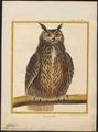 Bubo maximus - 1700-1880 - Print - Iconographia Zoologica - Special Collections University of Amsterdam - UBA01 IZ18400065.tif