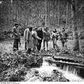 Bundesarchiv Bild 183-Z1116-013, Naturschutzgebiet Vessertal, Biosphärenreservat.jpg