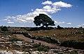 Burren-30-Poulnabrone-Landschaft-Baum-1989-gje.jpg