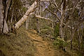 Bushland on southern Mount Majura.jpg