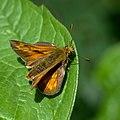 Butterfly (35748769660).jpg
