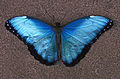 Butterfly - Butterfly Place in Westford, Massachusetts.jpg
