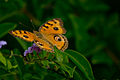 Butterfly is a nature of a part.jpg